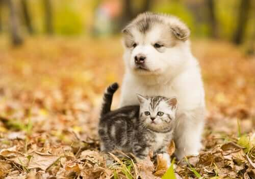 A puppy and a kitty in the woods.