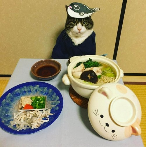 Maro the cat posing in front of its Japanese food
