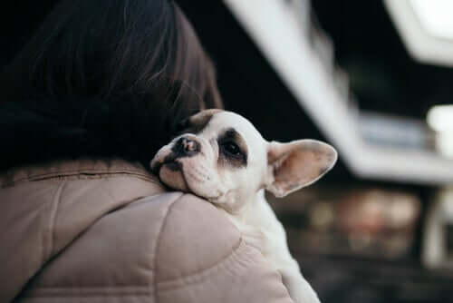 A dog being hugged by a woman.