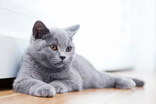13 Cat Breeds You Didn't Know Existed