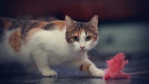 Cats love to throw things on the ground.