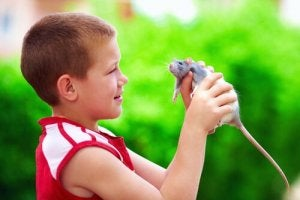 Rats are great pets for children.