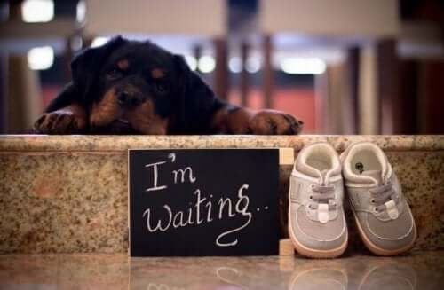 Dogs and Babies: How These Future Parents Responded