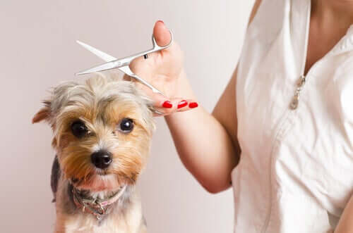 How to Become a Dog Groomer - 7 Top Tips