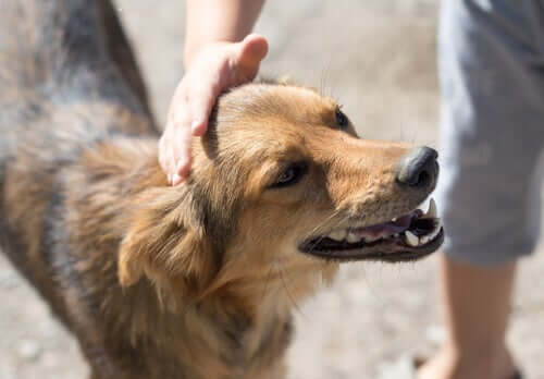 Where Can You Adopt a Dog in Your City?