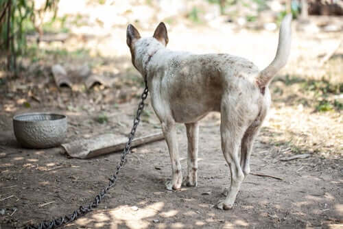 The Dangers of Leaving Your Dog Tied Up