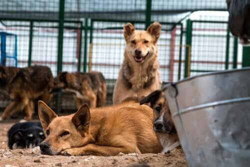 A group of stray dogs in an animal shelter.