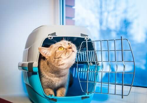 Cat traveling in carrier crate.