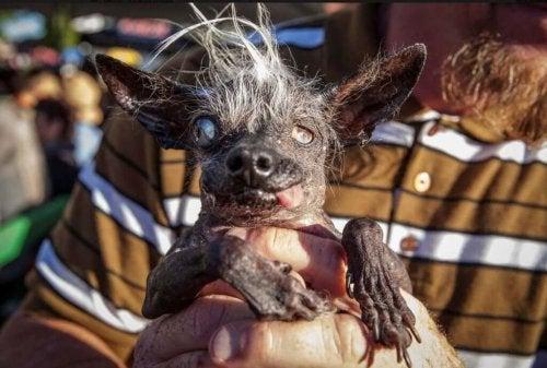 "An Ugly Pet Contest – Rewarding the ""Ugliest Pet"""