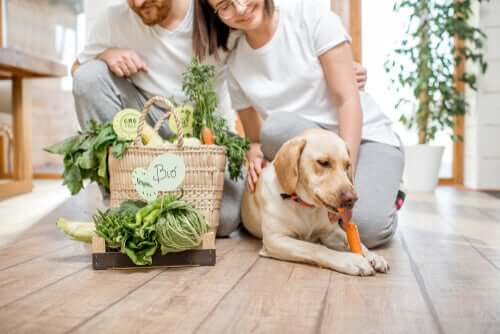 A couple and their dog after buying vegetables.