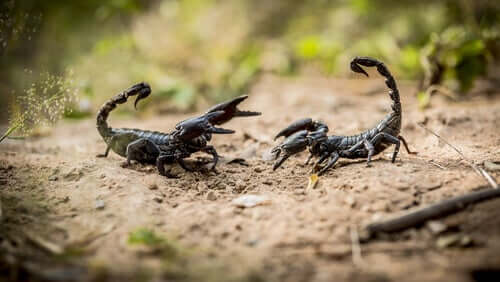 Are Scorpions Dangerous? Eight Things You Should Know