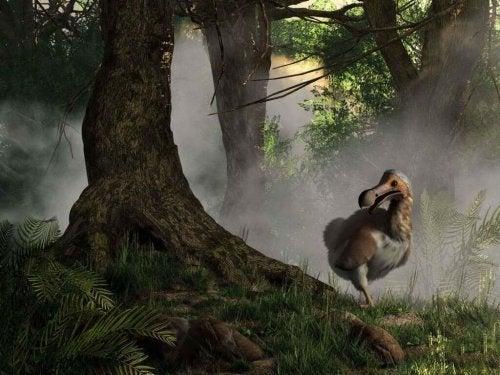 Dodo Birds: The Story of an Extinct Species