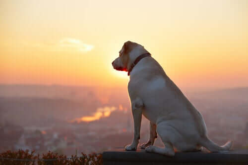 A dog looking from top of a mountain.