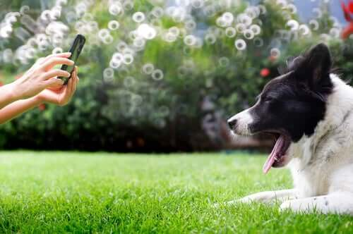 A person photographing a dog.