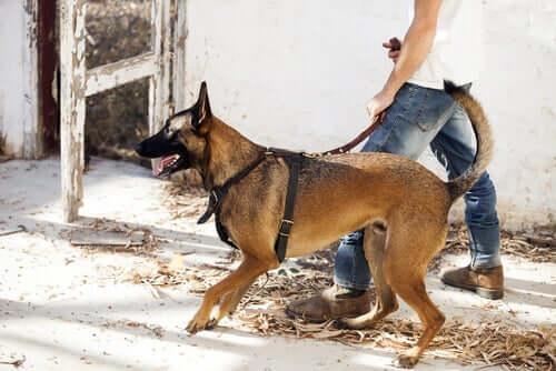 A person walking a dog.