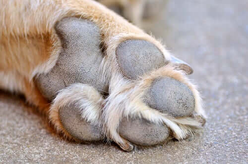 Close up of a dog's paws.