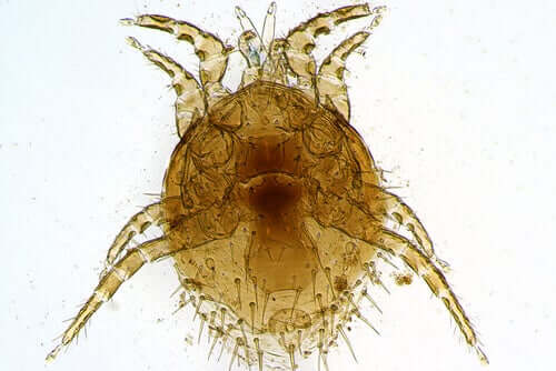 All You Need to Know About Species of Mite