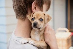 A boy and a puppy.