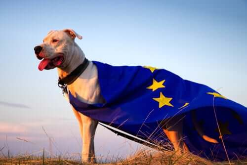 A dog with a European Union flag draped over it standing in a field.