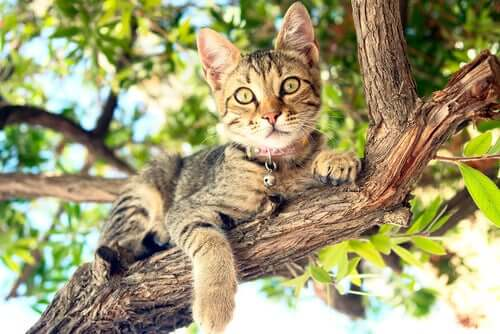A cat in a tree.