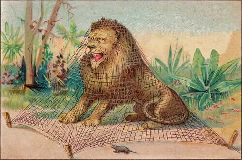 A lion is standing trapped under a net.