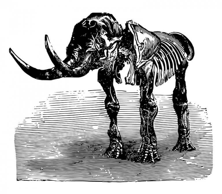 An illustration showing a mastodon skeleton.
