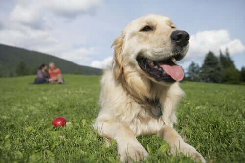 Men or Women: Who Gets Along Better With Dogs?