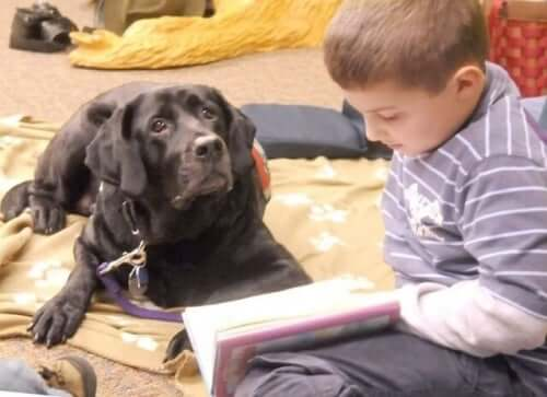 Dogs in classrooms helping children learn.