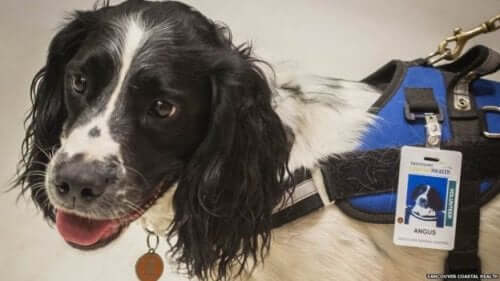 Two Dogs Sniffing Out Superbugs in a Canadian Hospital