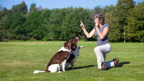 A woman in a park teaching two dogs to sit.