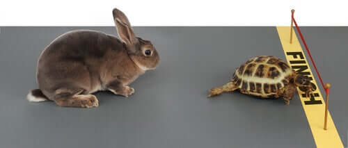 A tortoise crossing a finish line in front of a hare in animal stories for kids.