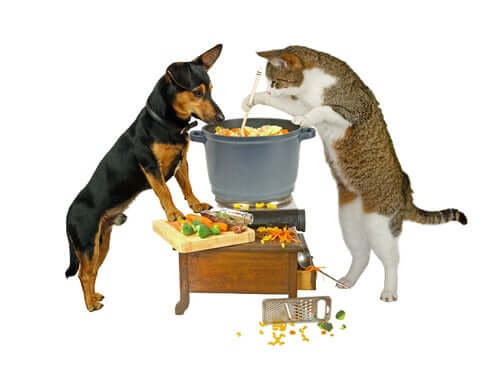 A cat and a dog cooking a meal.