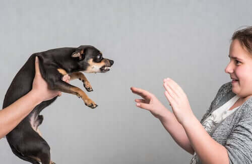 A dog being aggressive towards a girl.