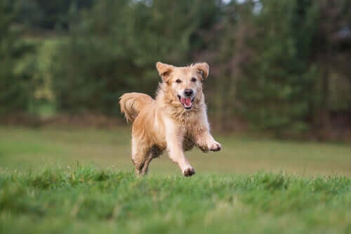 A jumping dog.