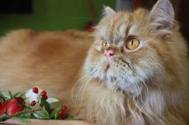 The Most Sociable Cat Breeds to Choose From