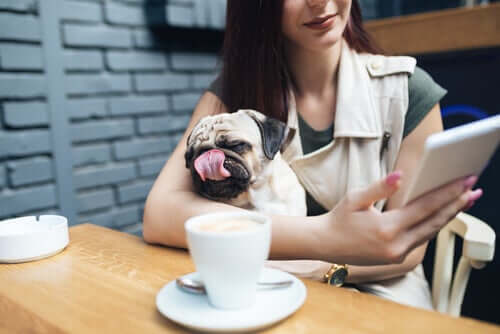 Regulations for Dogs in Public Establishments
