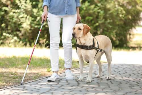 A woman and her guide dog.