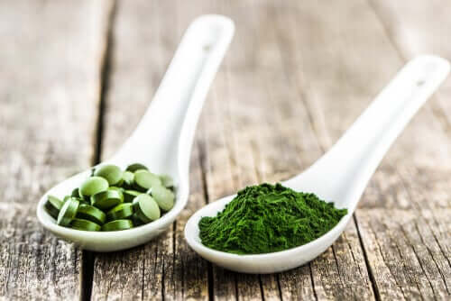 The 3 Main Benefits of Chlorella for Dogs