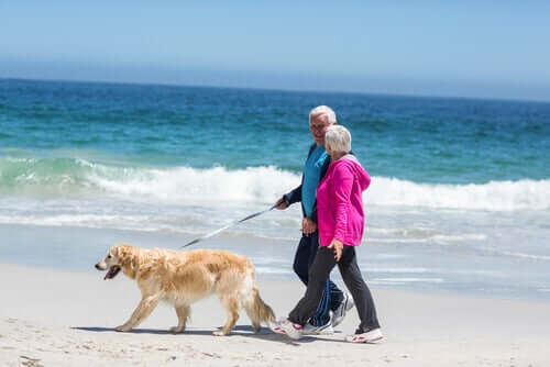 A couple walking a dog on the beach.