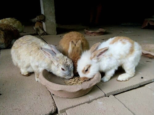 How Much and When Rabbits Should Eat