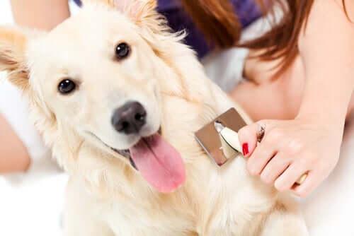 An owner brushing their dog's fur.
