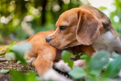 A dog resting in nature.