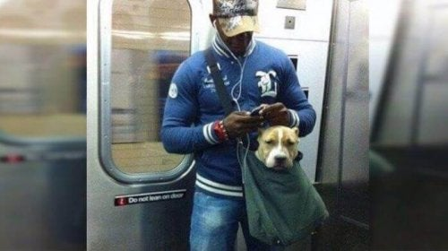 A dog and his owner in the subway.