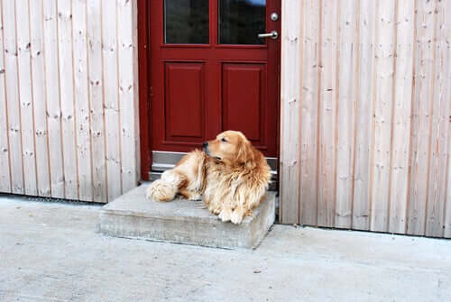 A dog in front of a boarding kennel.