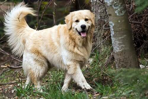 Treating Urinary Infections in Dogs