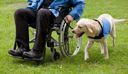 A dog giving assisted therapy.