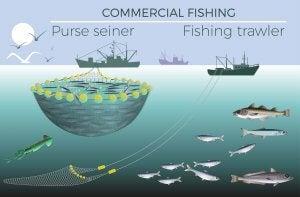 Different types of fishing.