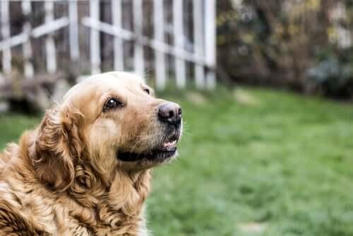 A dog in a garden.