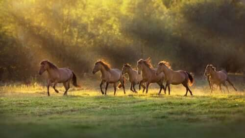 Wild horses in field.