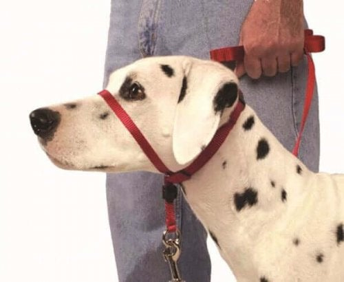 The Head Collar: How to Use It Correctly